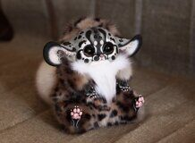 Inari Fox: Serval brown eyes