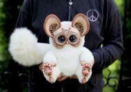 Tiny Griffin Lemur White