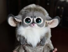 Inari Fox: Chinchilla